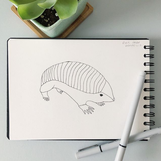Inktober Day 20: Pink fairy armadillo