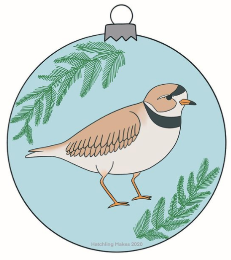 Birds In December Day 12 : Piping Plover