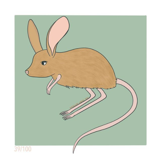 100 Day Project Day 39: Long eared jerboa