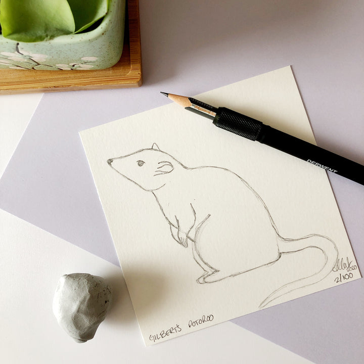 100 Day Project: Gilbert's Potoroo