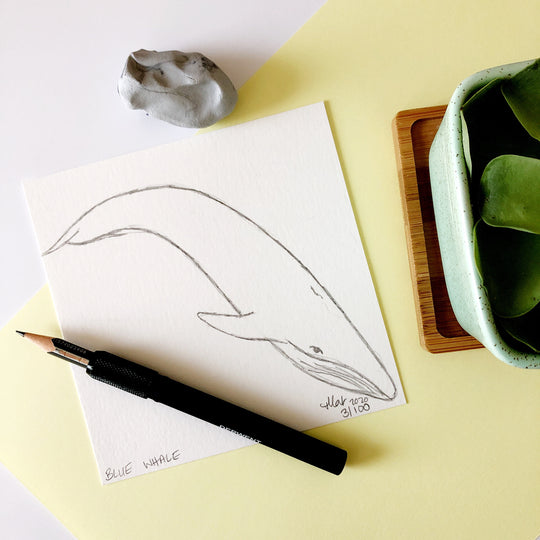 100 Day Project: Blue Whale
