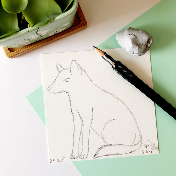 100 Day Project: Dhole