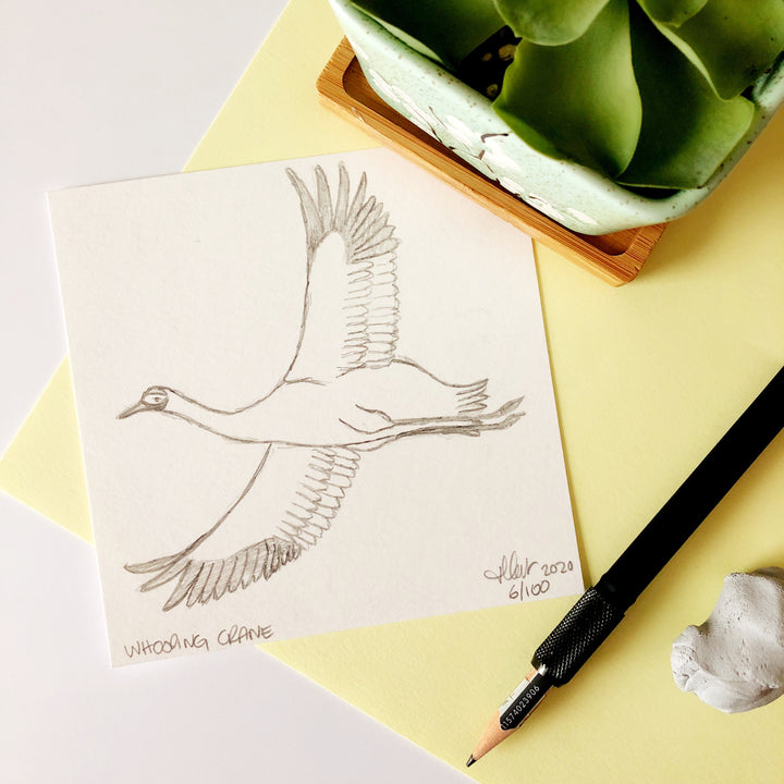 100 Day Project: Whooping Crane