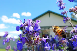 Why Honey Bees Need Bee-Centered Beekeepers