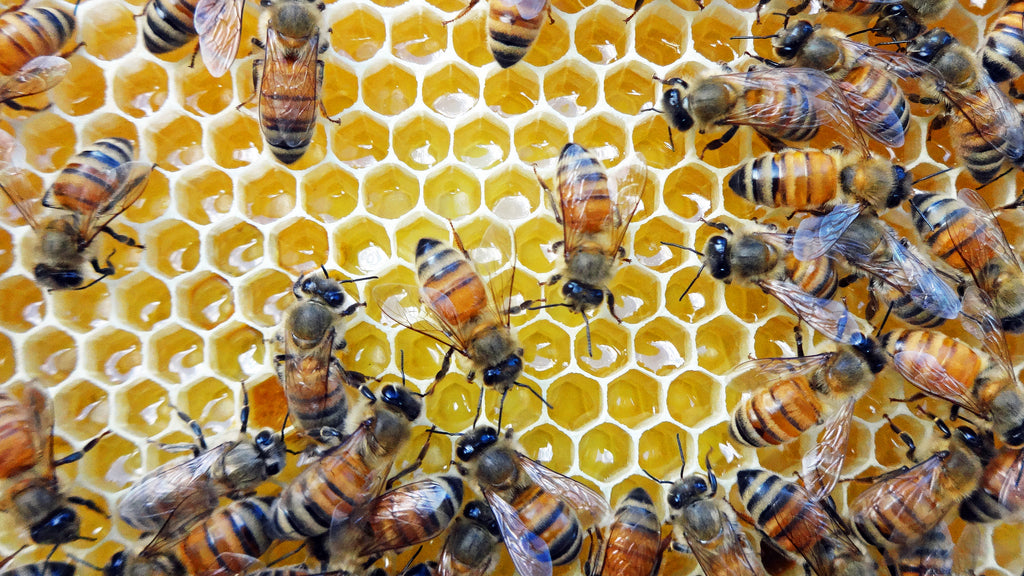 The Complexity of Honey Nutrition for Honey Bees