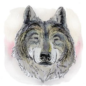 Koda the Wolf: A Soulmate in Wolf's Clothing