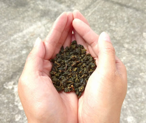 Hold Milk Oolong Tea leaves in your palm and smell the aroma - ToDoTea