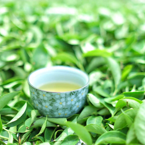 Taiwan Oolong tea and loose tea leaves - ToDoTea
