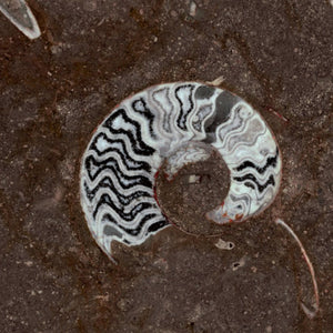 MARBLE - GRANDE FOSSILE