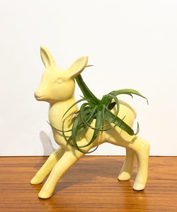Beautiful Fawn Planter by McCoy, w/ Air Plant