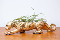 Fabulous 1950s Gold Panther Planter w/ Live Air Plant