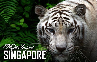 Night Safari White Tiger, 8859194802981