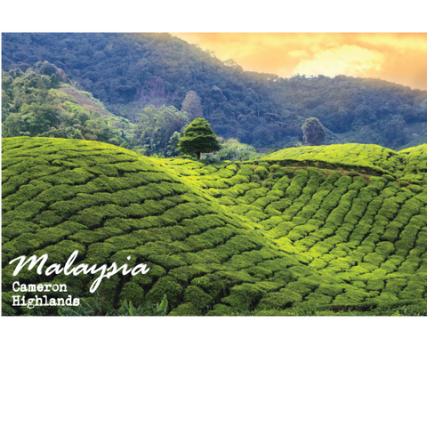 PC - Cameron Highlands, 8859194807153