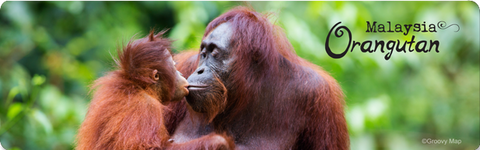 Orangutan Family (Long), 8859194814113