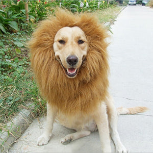 Lion Mane Pet Costume