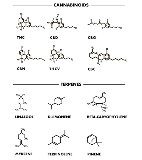 The Difference Between Cannabinoids and Terpenes