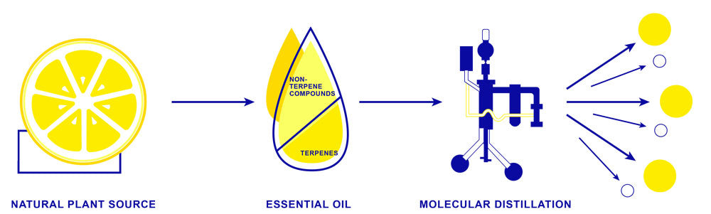 Difference between essential oils and terpenes