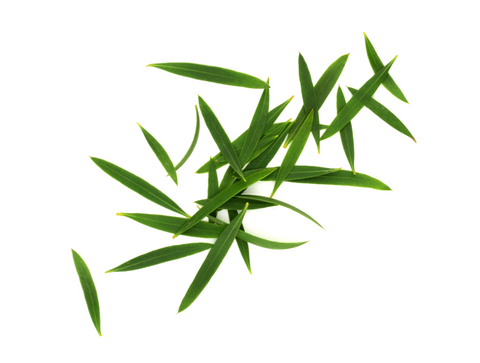 Tea tree, and tea tree oil, are incredibly dense with terpinolene - Abstrax Tech