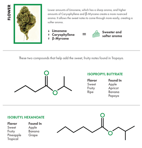 Compounds in Flower Visualized