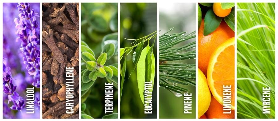 How are terpenes made? | What are terpenes made of?