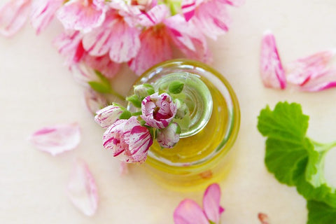 geraniol pink white geranium oil flowers leaves