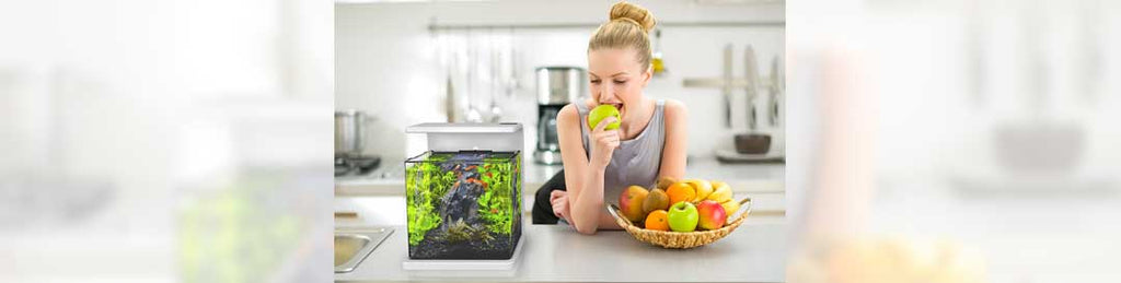 Aquariums Are Perfect for Small Spaces
