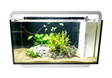 SR Aquaristik Deco Tank 25 Aquarium Kit Black Spider Wood Aquascape (Options Available)