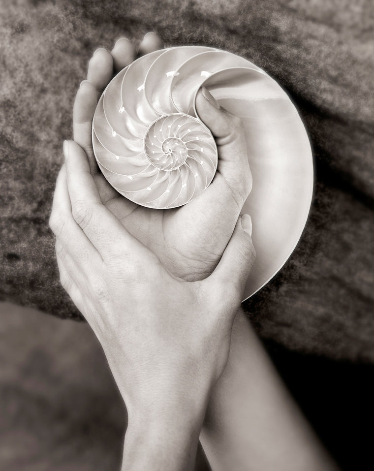Hands and Nautilus
