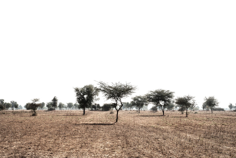 Thar Fields