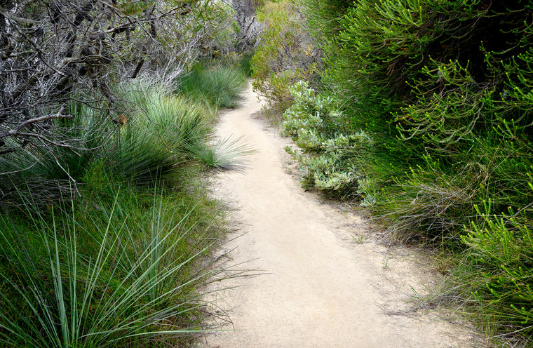 Royal National Park path with native vegetation