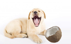 COCONUT OIL- THE MIRACLE PRODUCT FOR YOUR DOG