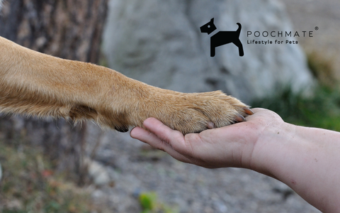 sustainable pet products online india