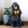 Cottyon Dog Bow Tie | Dog Bow Ties Online India