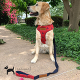 PoochMate Red Chirpy Harness & Lead Set