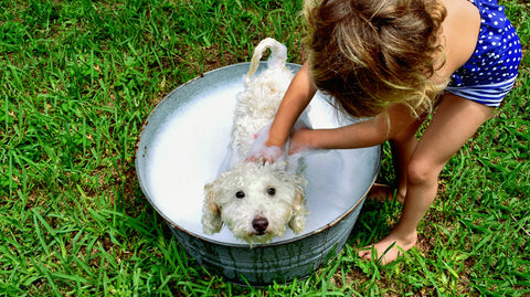 Dog Grooming Workshop for Kids