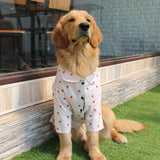 Dog Shirts online in India, Buy Summer Clothes for pets Online in India, Golden retriever in clothes