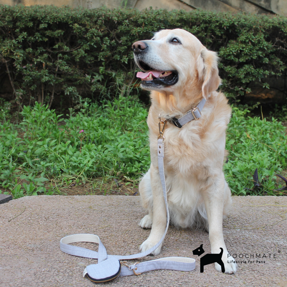 Dog Collar with Poop Bag India | Dog Collars | PoochMate