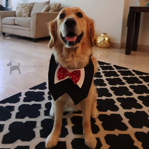 Dog Bowtie Tuxedo Golden Retriever Home