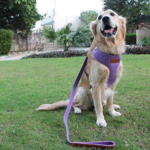 PoochMate Purple Felt Dog Harness