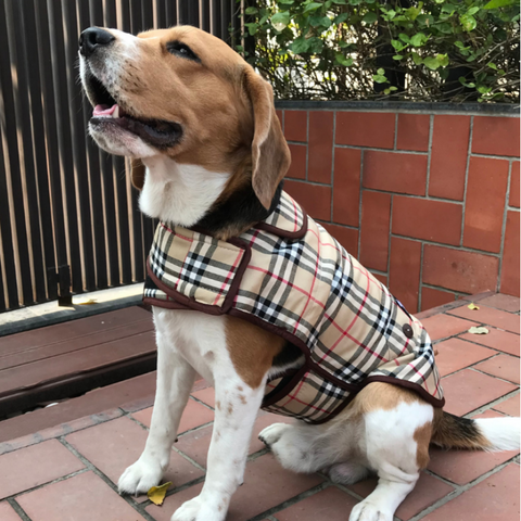 Fleece and Cotton Winter Coat for dogs | Burberry Print dog coat | PoochMate