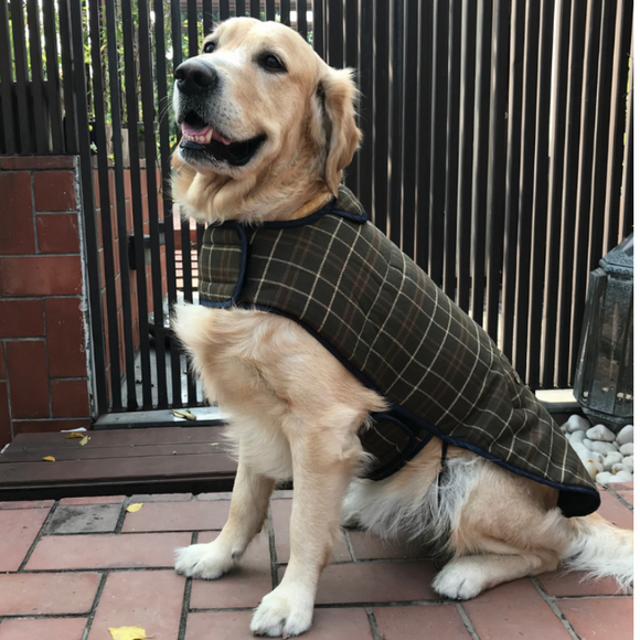 Clothes for dogs online India | Plaid wool winter coat | PoochMate