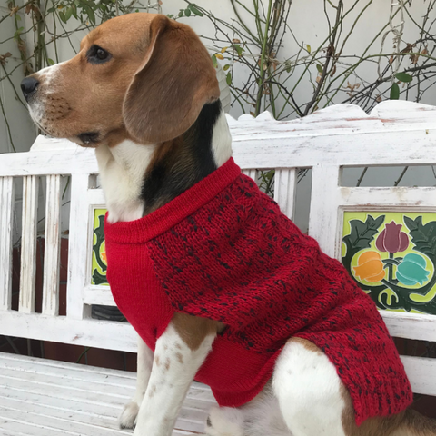 Buy dog sweaters online | Pet sweaters online India | PoochMate