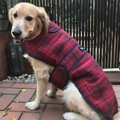 Wool Plaid Coats for dogs |Luxury Pet Clothing online India | PoochMate