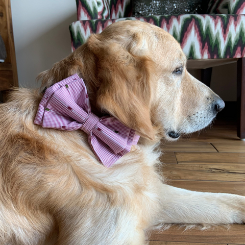 PoochMate Pink Checkmate Bow Tie