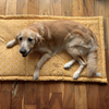 Dog Crate Mats | Washable dog beds online india