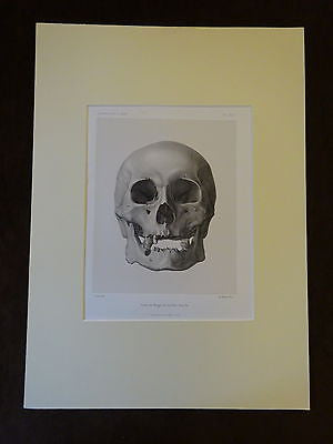 An Antique Anthropological Print
