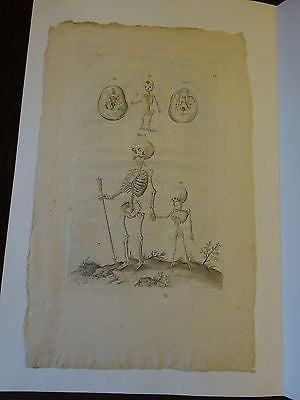 Original Antique Anatomical engraving print c 1600