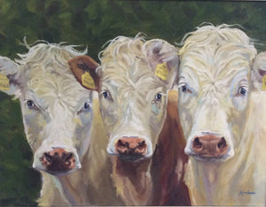 """Three Little Bullocks"""