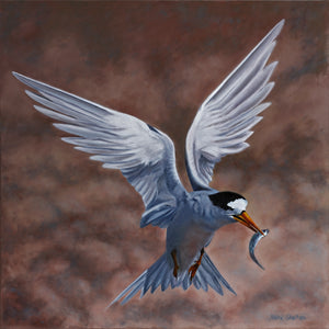 """Born to Fish – Fairy Tern"""
