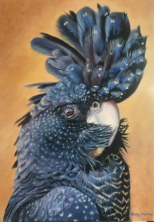 """Magnificus"" - Red-tailed Black Cockatoo"